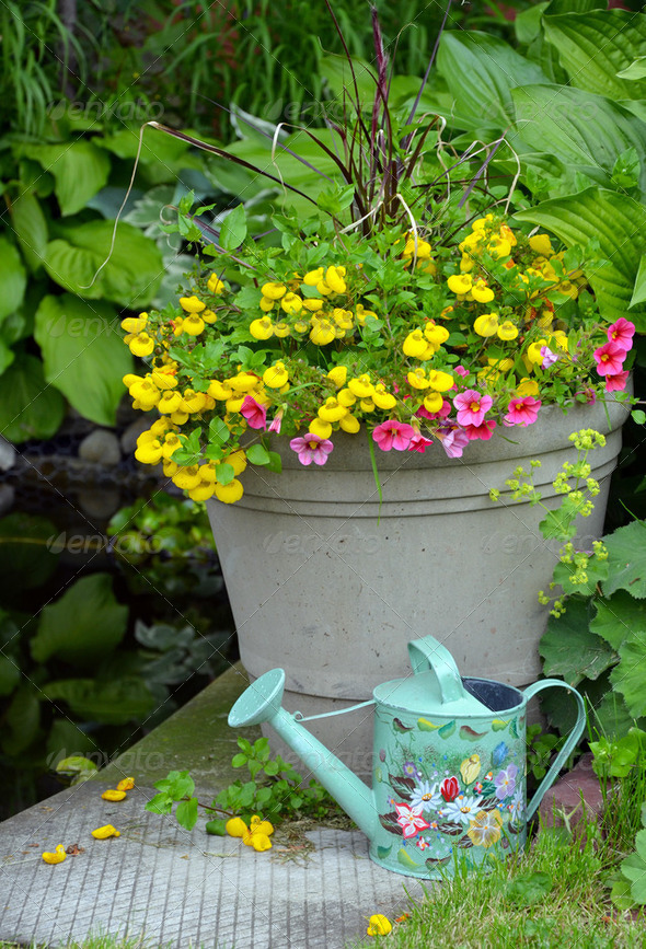 Spring planter - Stock Photo - Images