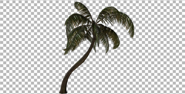 VideoHive Palm Tree 3382734