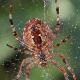 Spider On Spiderweb Winter - VideoHive Item for Sale
