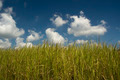 Grass and Sky - Background - PhotoDune Item for Sale