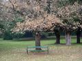 Bench In Autumn - PhotoDune Item for Sale