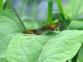 Butterfly Resting - PhotoDune Item for Sale