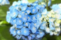 blue flowers - PhotoDune Item for Sale