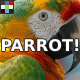 Ara Parrot Squawks