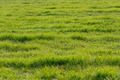 Green crop field - PhotoDune Item for Sale