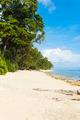 Pristine Untouched White Sand Beach Paradise - PhotoDune Item for Sale