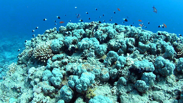 Underwater Reef View VideoHive Stock Footage  Nature 3447221
