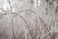 Heavy ice bending branches - PhotoDune Item for Sale
