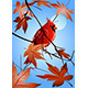 The  Northern Cardinal Sitting on a Maple Branch - GraphicRiver Item for Sale
