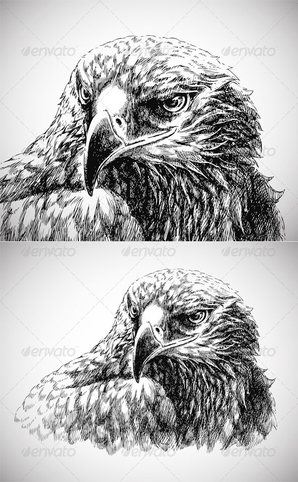 Eagle head line art - vector+jpg - Nature Conceptual