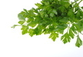 green parsley isolated on white background - PhotoDune Item for Sale