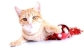 Orange kitten with Christmas decorations on white background - PhotoDune Item for Sale