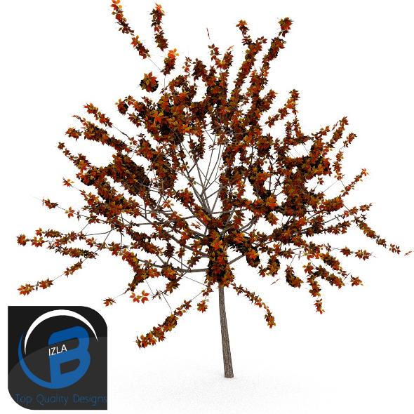 3DOcean Tree 9 3506399