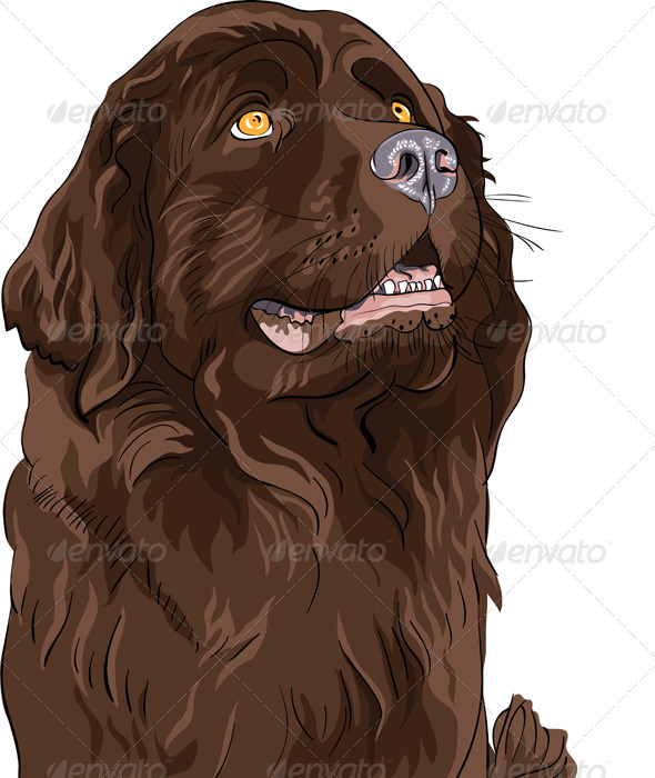 GraphicRiver Vector Sketch Dog Newfoundland Hound Breed 3509176