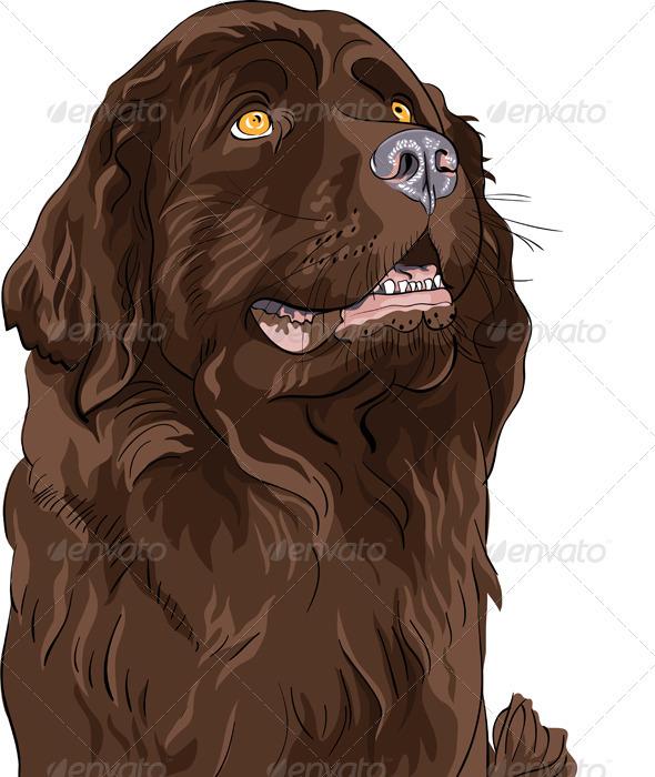 GraphicRiver Vector Sketch Dog Newfoundland Hound Breed 3509176