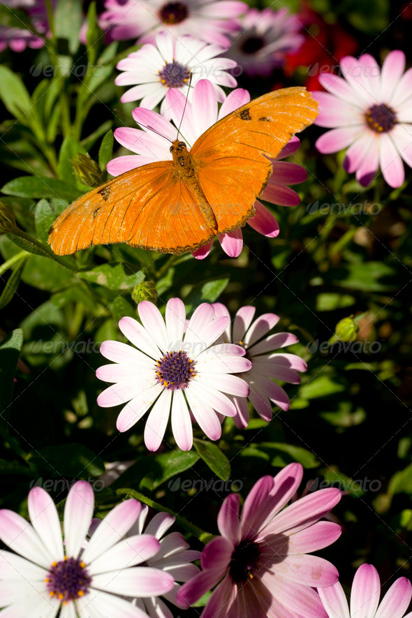 Stationary Butterfly - Stock Photo - Images