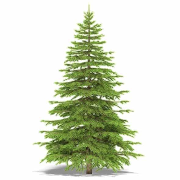 3DOcean Spruce 3538257