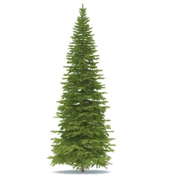3DOcean Spruce 3539138