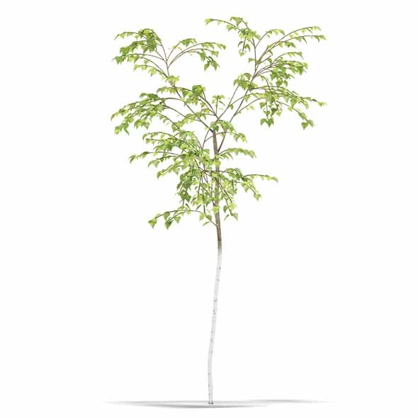 3DOcean Birch 3544119
