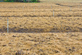 soil preparation land for vegetable cultivation farm - PhotoDune Item for Sale