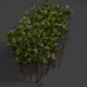 Bush - Shrub - 3DOcean Item for Sale