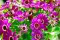 Violet Flowers - PhotoDune Item for Sale