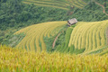 Rice terraces and cottage in the mountains - PhotoDune Item for Sale
