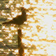 Seagull in the Sunset - VideoHive Item for Sale