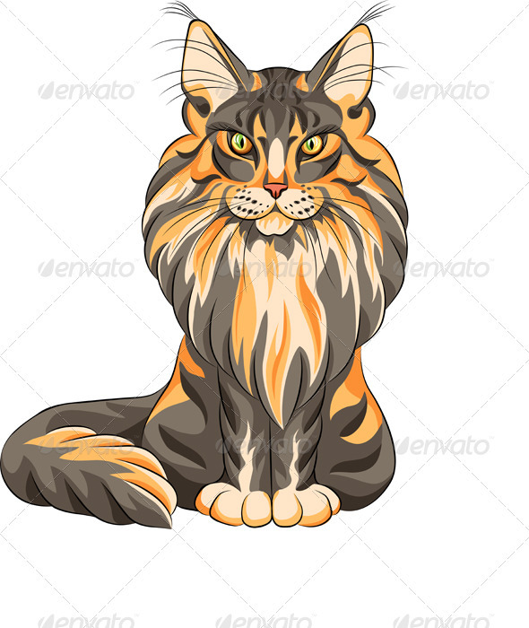 Vector Color Sketch Fluffy Maine Coon Cat  - Animals Characters