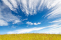 Grass field under blue cloudy sky - PhotoDune Item for Sale