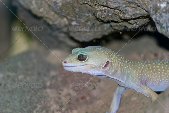 Gecko - Stock Photo - Images