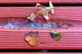 Fall Leaves On Wood - PhotoDune Item for Sale