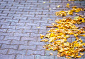 Autumn Leaves on the road - PhotoDune Item for Sale
