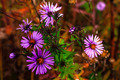 Fall Wildflowers in Meadow Landscape - PhotoDune Item for Sale