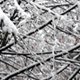 Falling Snow on Trees - VideoHive Item for Sale