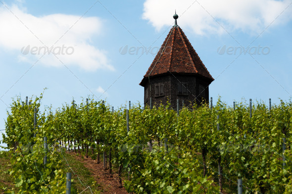 PhotoDune Vineyard with Melac Tower in ObertЁ№rkheim 3669053