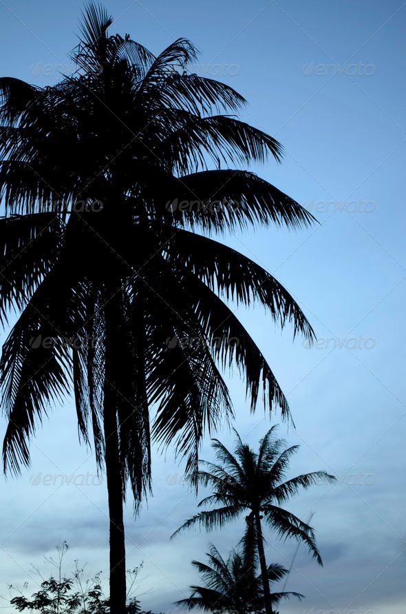 PhotoDune Coconut trees during blue hour 3669095
