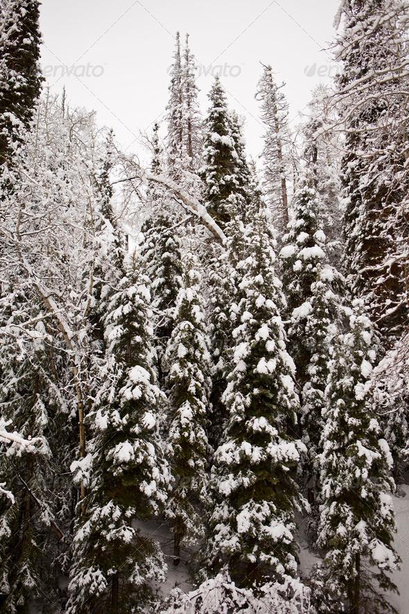 PhotoDune Trees With Winter Snow 3675760