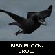 Bird Flock : Crow - ActiveDen Item for Sale