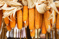 Dried corn on cobs hung on the beam - PhotoDune Item for Sale