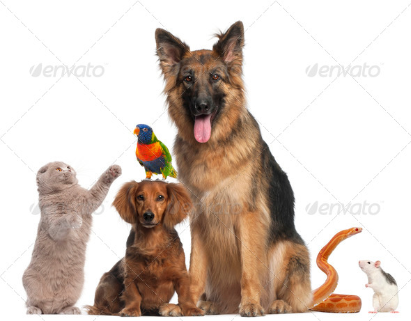 Stock Photo - PhotoDune Group of animals in front of white background 399442