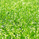 Green Grass - VideoHive Item for Sale