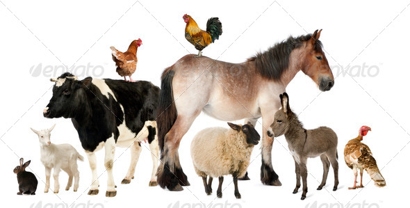 Stock Photo - PhotoDune Variety of farm animals in front of white background 399862