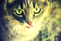 Cute Cat Portrait #2 - PhotoDune Item for Sale