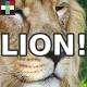 Lion Roar Set