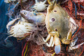 Crab and fish in a fishing nets - PhotoDune Item for Sale