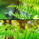 Sunny Ferns x2 - Macro & Loopable - VideoHive Item for Sale
