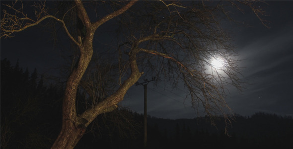 Moon Stars And A Tree In Night Time Lapse Pack VideoHive Stock Footage  Time Lapse 3762528