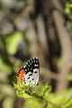 Butterfly on a Leaf. - PhotoDune Item for Sale
