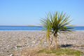 palm tree on a beach against the sea - PhotoDune Item for Sale